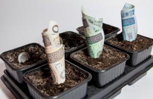 Moneyback – jak to działa?
