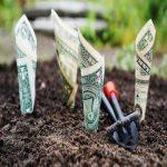 banknoty rosnące w ogrodzie